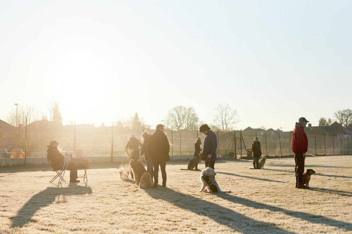 2017_01_21_Harrys-Dog-Training_Capture_02-1.jpg - Harry's Dog Training - Jack Terry
