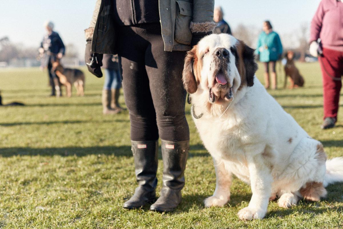 2017_01_21_Harrys-Dog-Training_Capture_03-1.jpg - Harry's Dog Training - Jack Terry