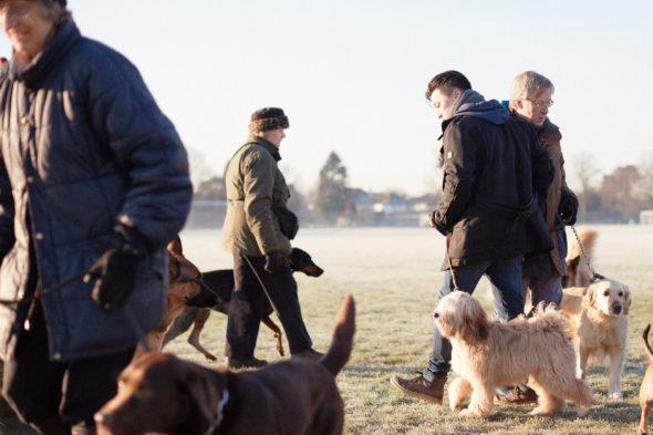 2017_01_21_Harrys-Dog-Training_Capture_04-1.jpg - Harry's Dog Training - Jack Terry