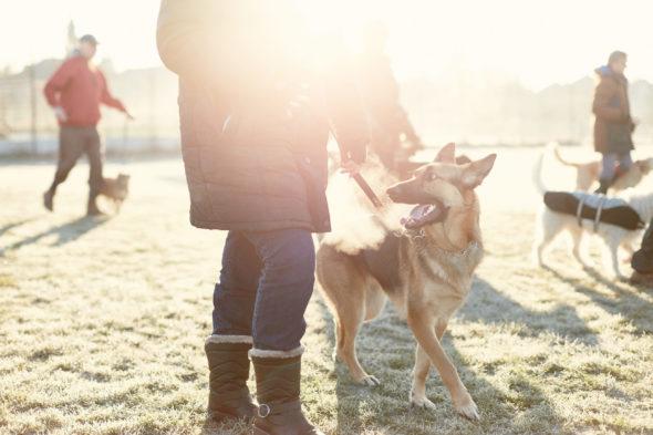 2017_01_21_Harrys-Dog-Training_Capture_05-1.jpg - Harry's Dog Training - Jack Terry