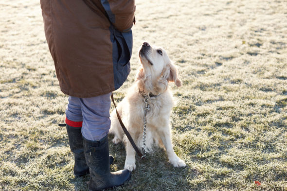 2017_01_21_Harrys-Dog-Training_Capture_08-1.jpg - Harry's Dog Training - Jack Terry