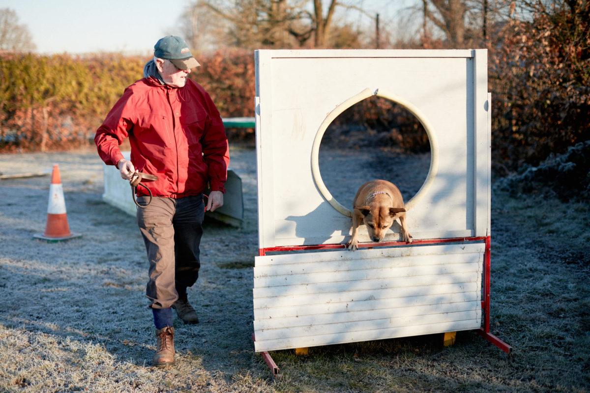 2017_01_21_Harrys-Dog-Training_Capture_10-1.jpg - Harry's Dog Training - Jack Terry